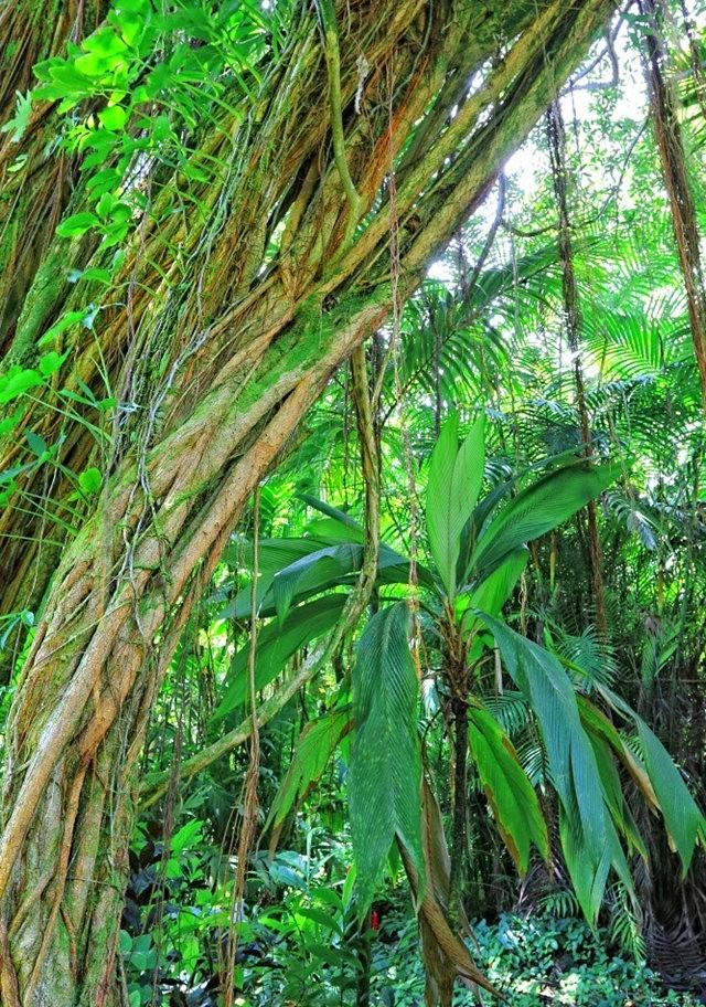 参观夏威夷热带生物保护区花园---2_图1-6