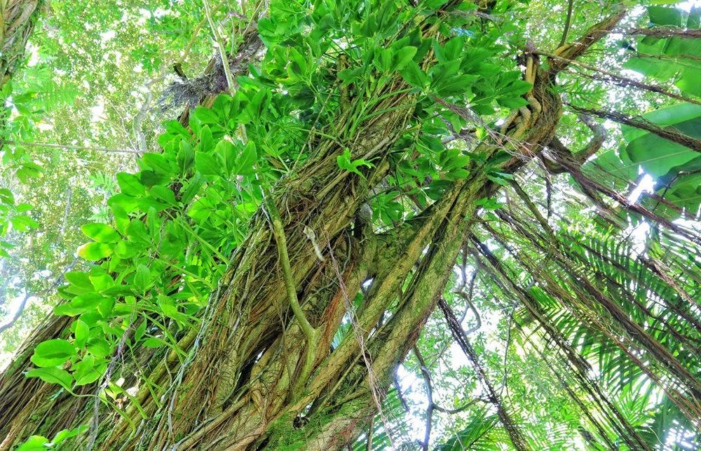 参观夏威夷热带生物保护区花园---2_图1-7