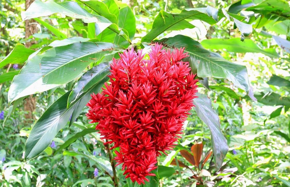 参观夏威夷热带生物保护区花园---2_图1-8