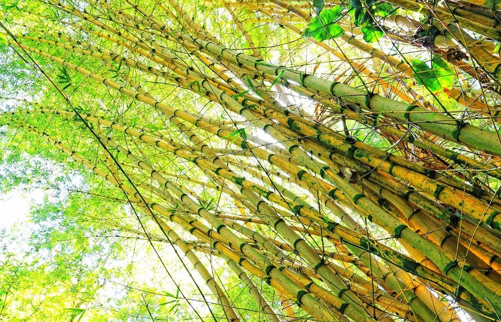参观夏威夷热带生物保护区花园---2_图1-9