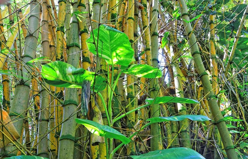 参观夏威夷热带生物保护区花园---2_图1-10