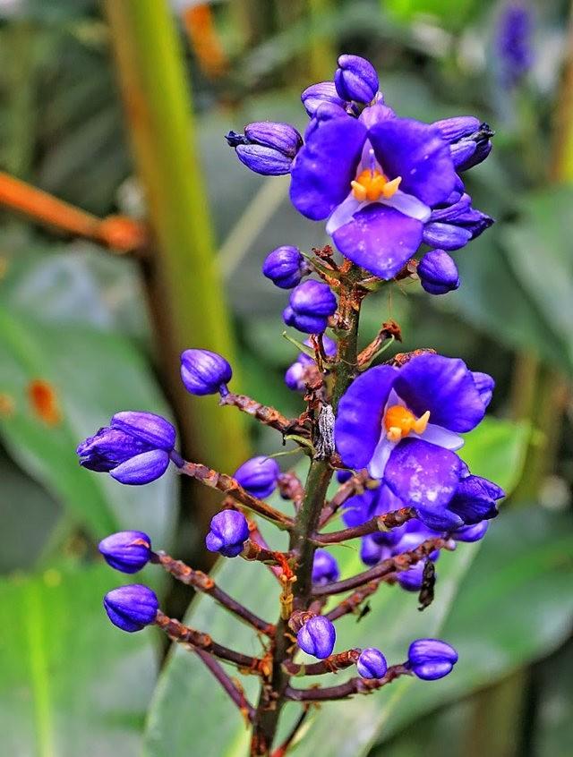 参观夏威夷热带生物保护区花园---2_图1-14