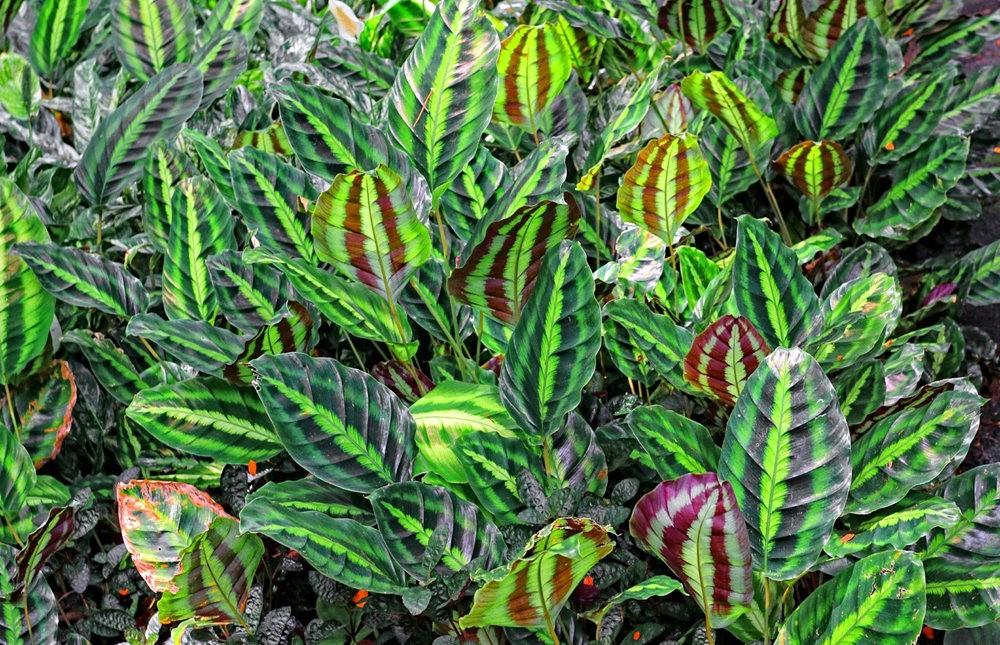 参观夏威夷热带生物保护区花园---2_图1-19