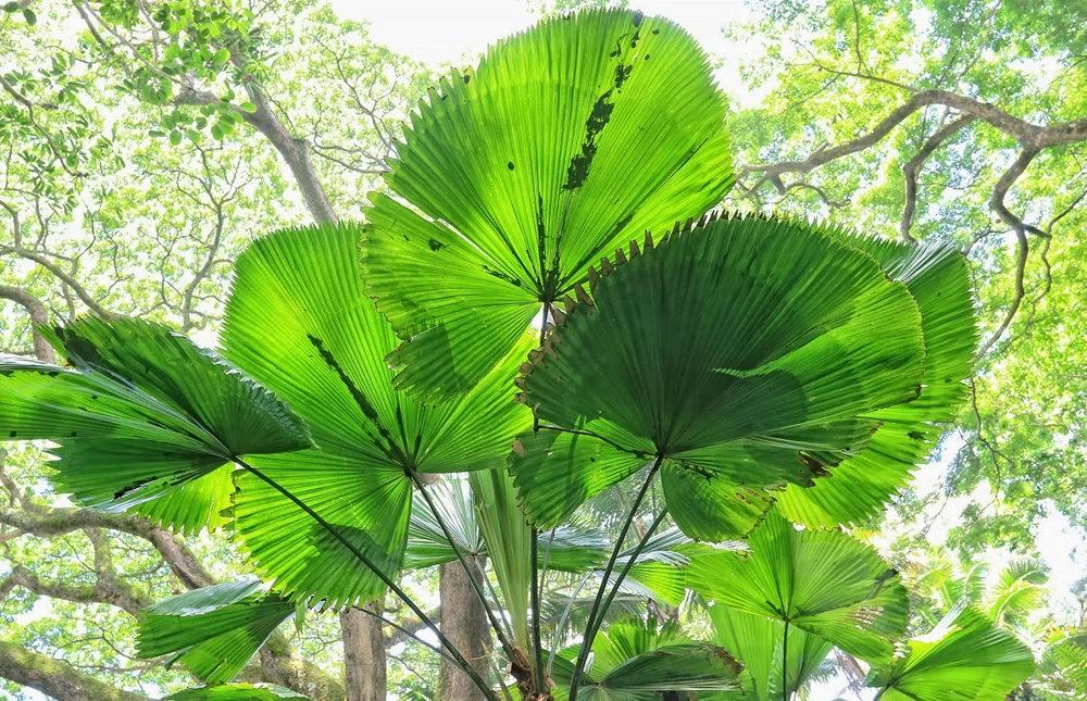 参观夏威夷热带生物保护区花园---2_图1-23