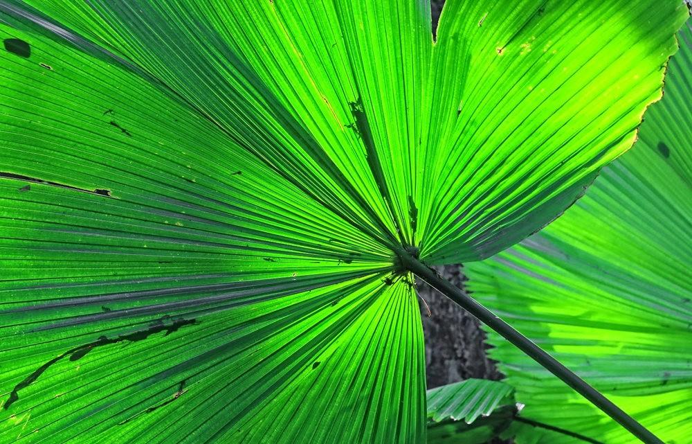 参观夏威夷热带生物保护区花园---2_图1-24