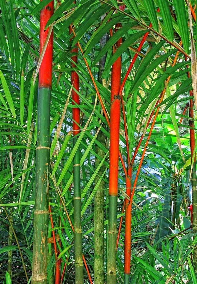 参观夏威夷热带生物保护区花园---2_图1-25