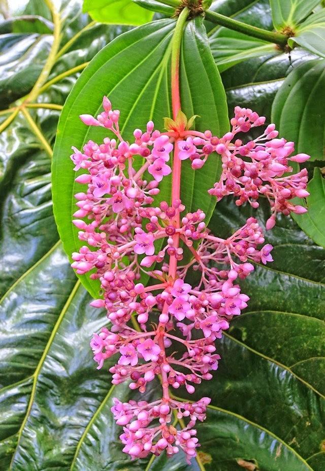 参观夏威夷热带生物保护区花园---2_图1-26