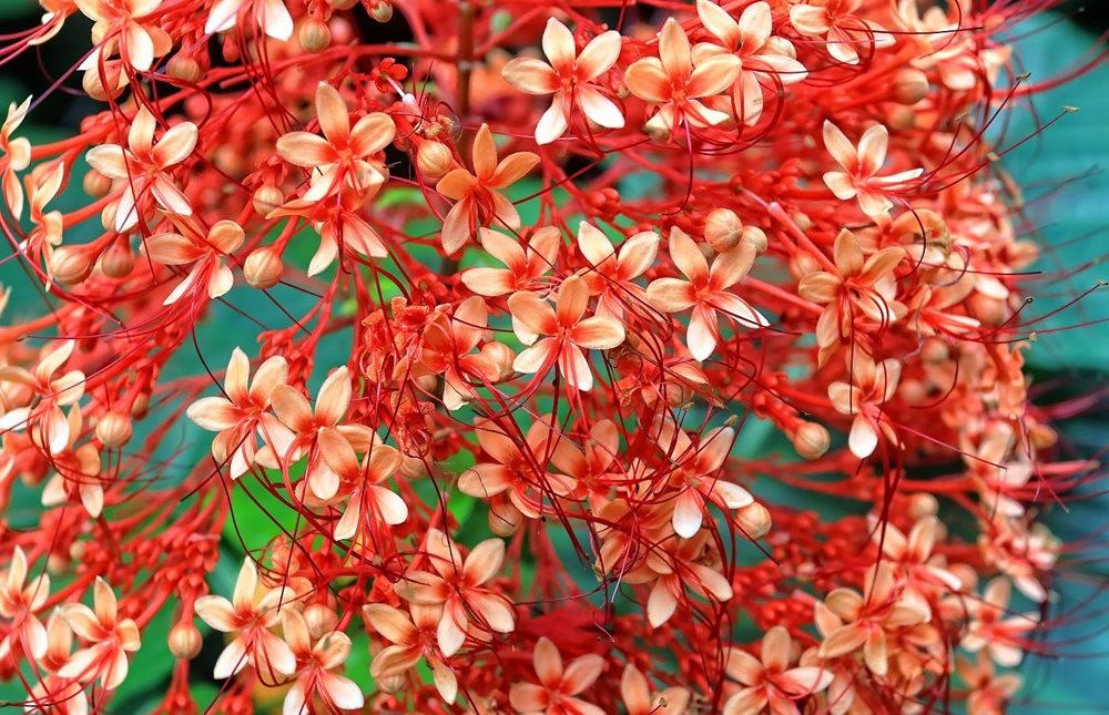 参观夏威夷热带生物保护区花园---2_图1-27