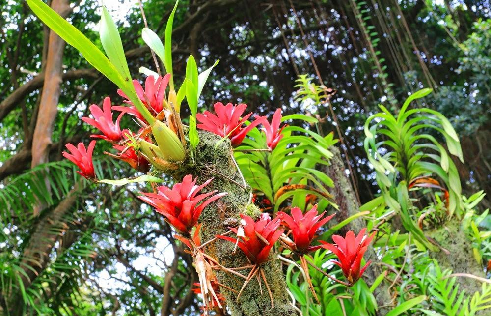 参观夏威夷热带生物保护区花园---2_图1-29