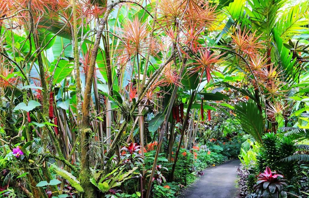 参观夏威夷热带生物保护区花园---2_图1-30