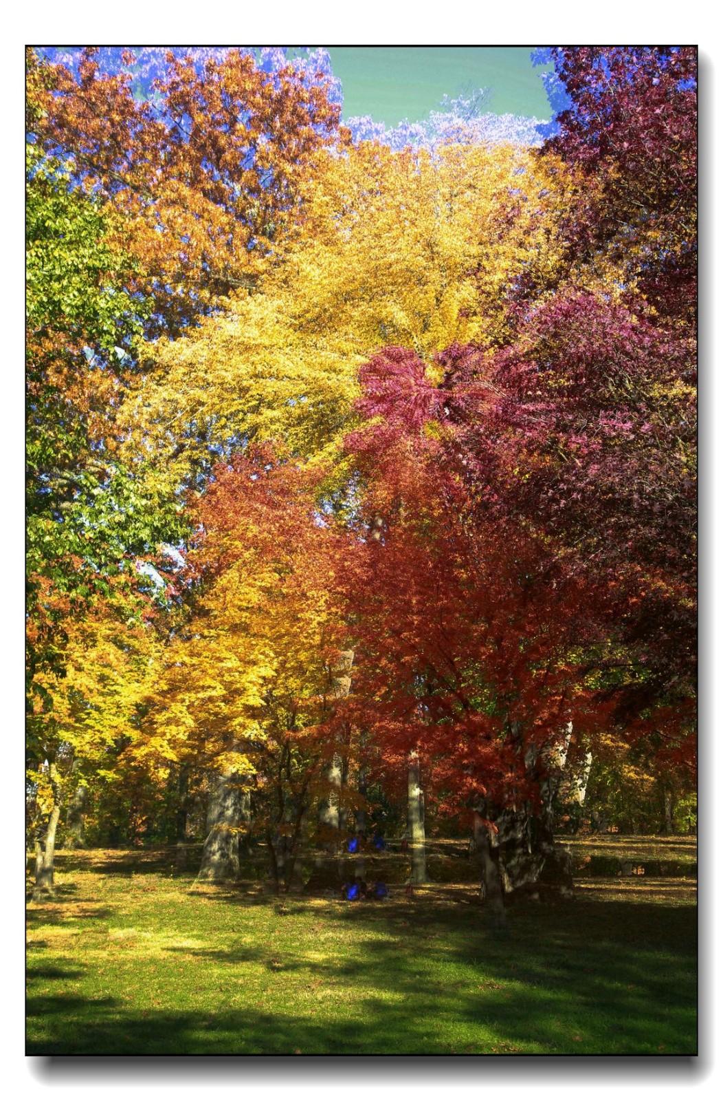 深秋色彩-凯辛娜公园2_图1-5