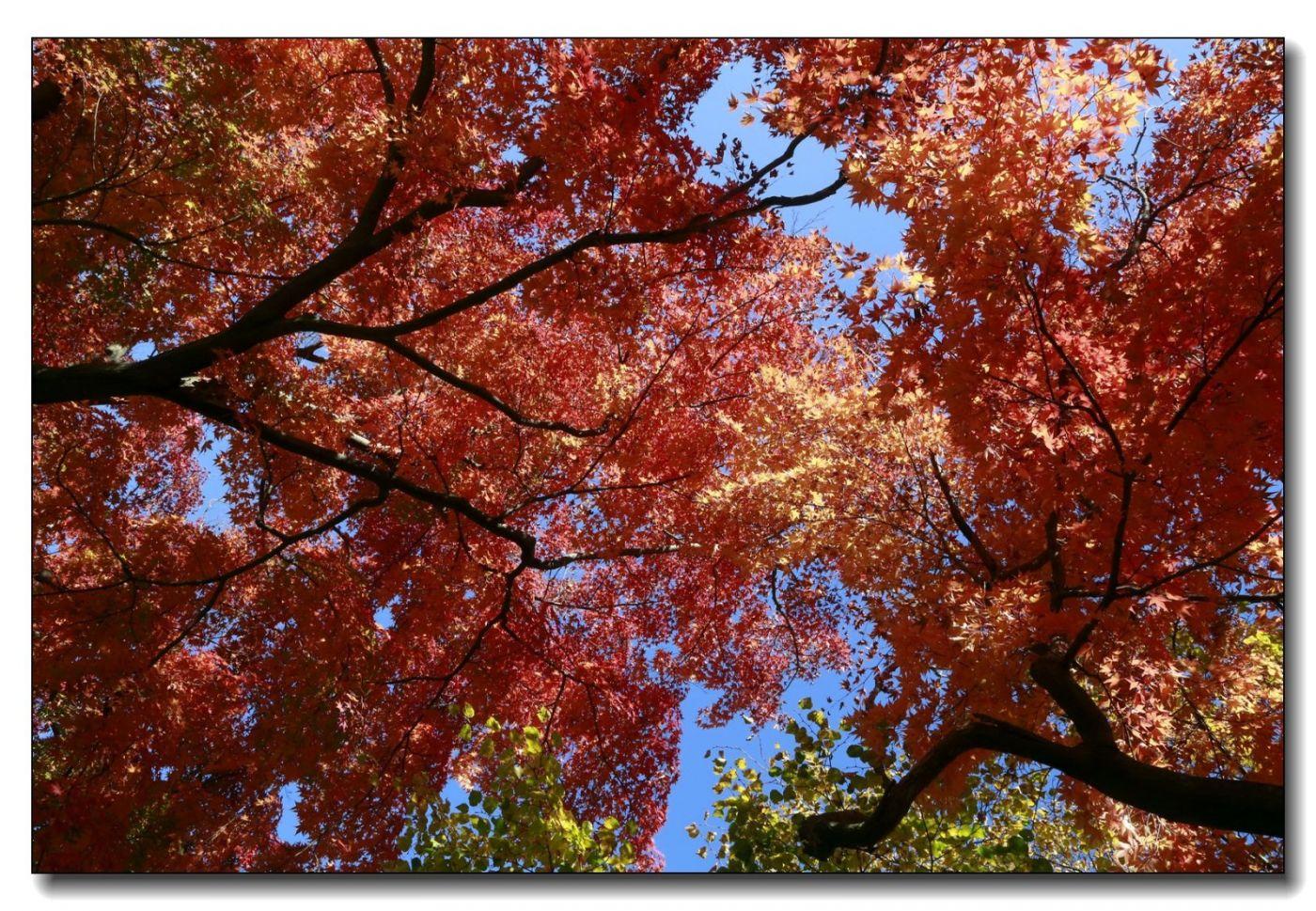 深秋色彩-凯辛娜公园2_图1-9