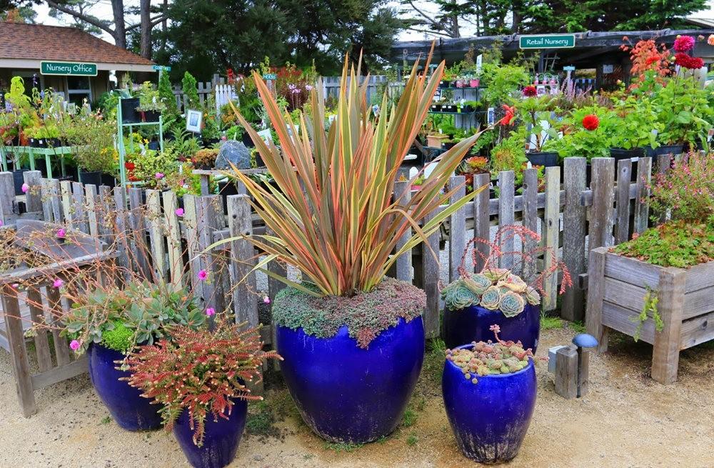 门多西诺海岸植物园2018 版本_图1-9