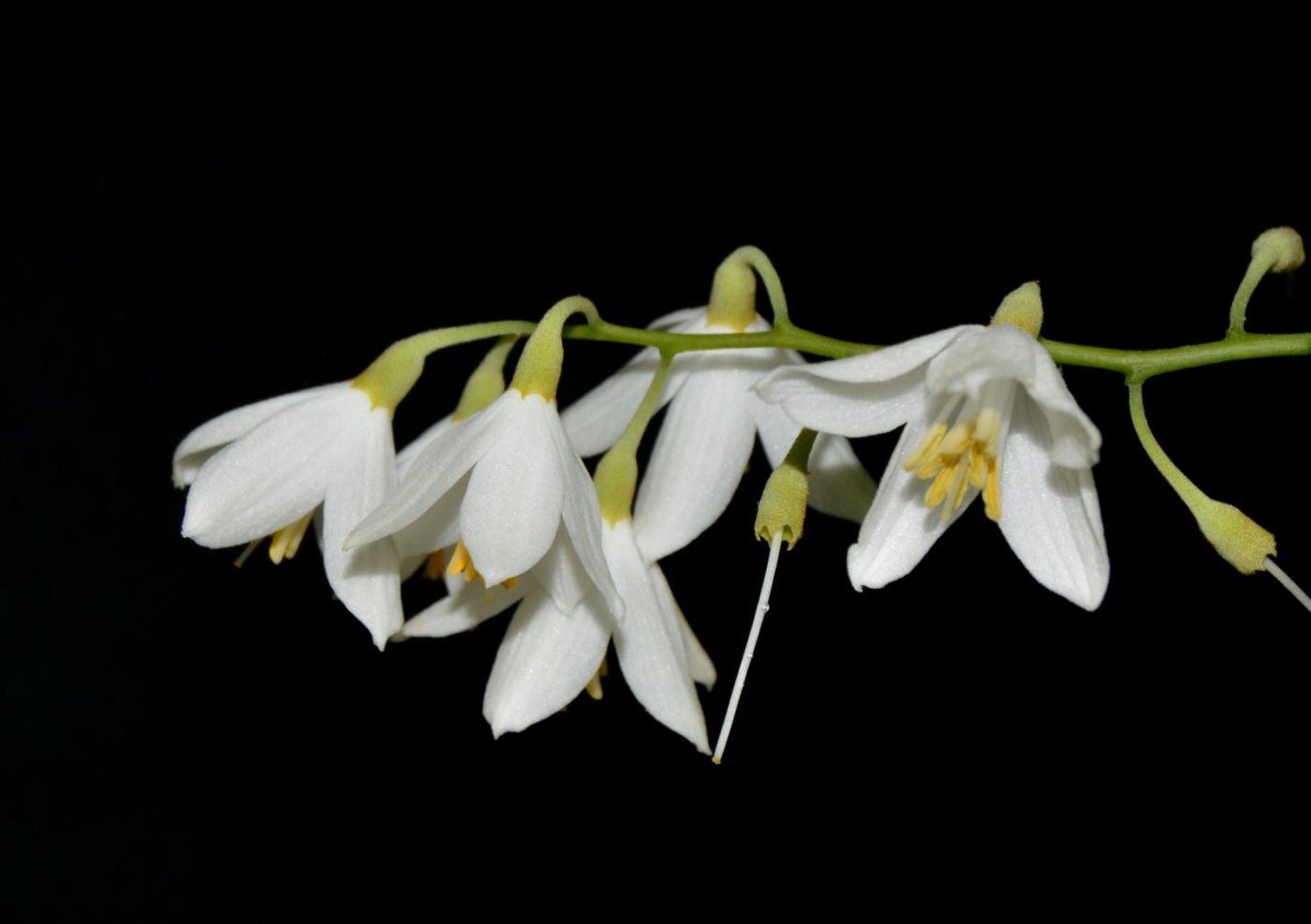 花草图谱 (12)_图1-12