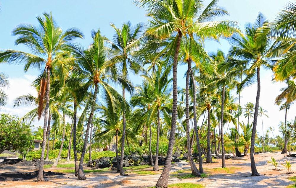 在夏威夷大岛度假_图1-4