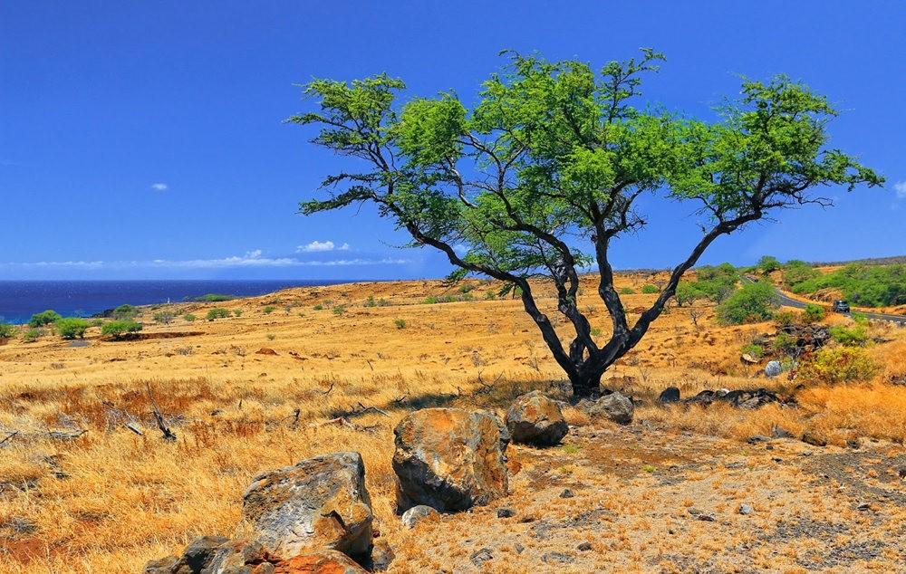 在夏威夷大岛度假_图1-14