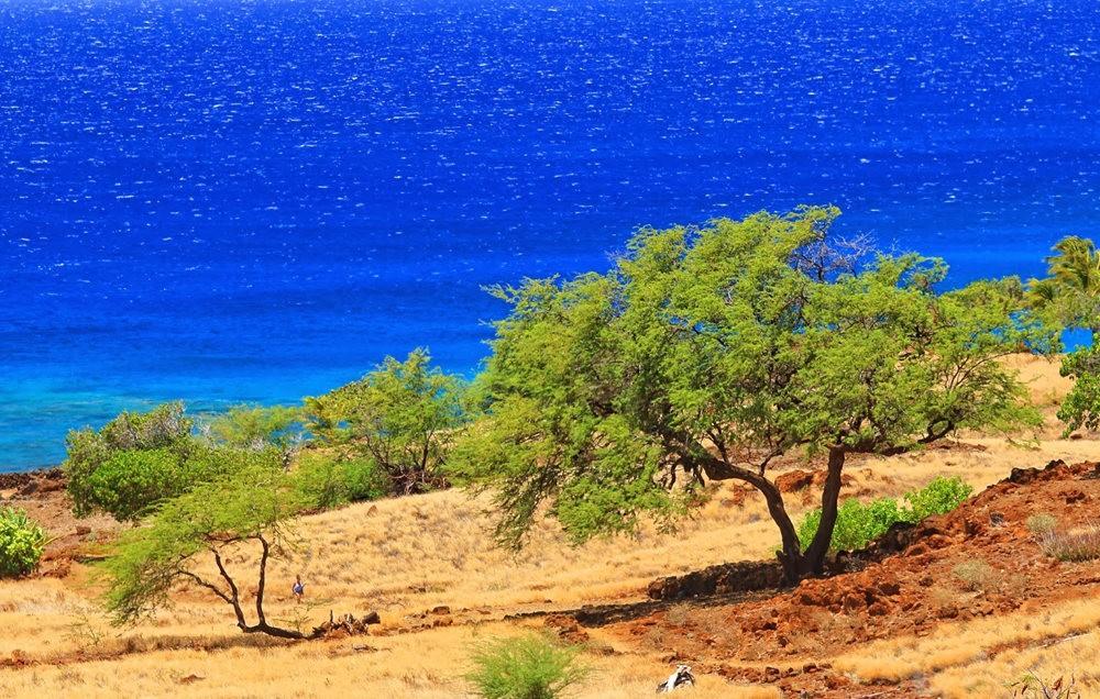 在夏威夷大岛度假_图1-15