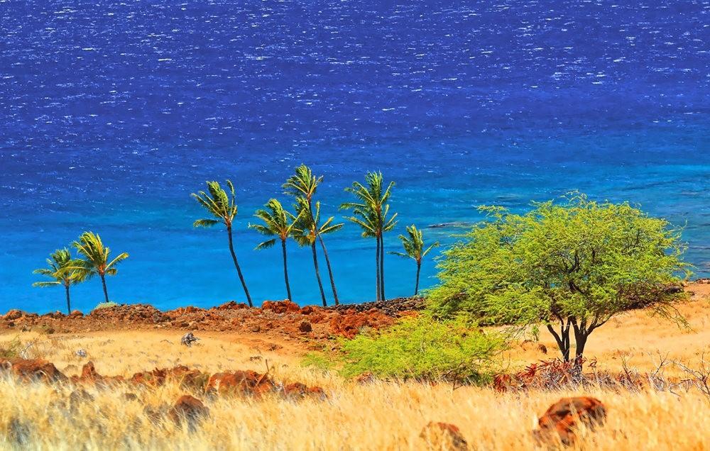 在夏威夷大岛度假_图1-16