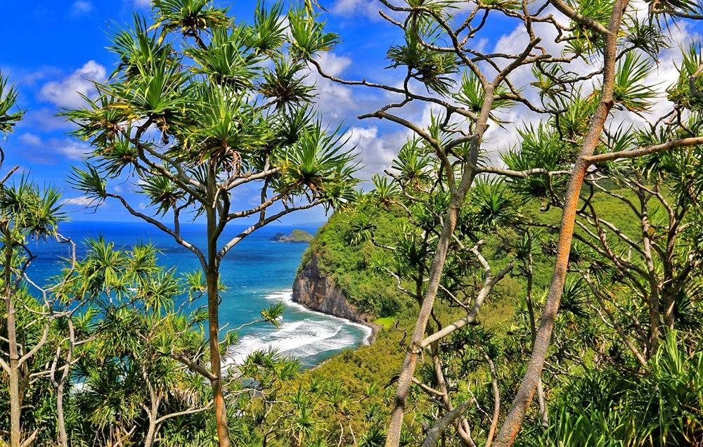 在夏威夷大岛度假_图1-20