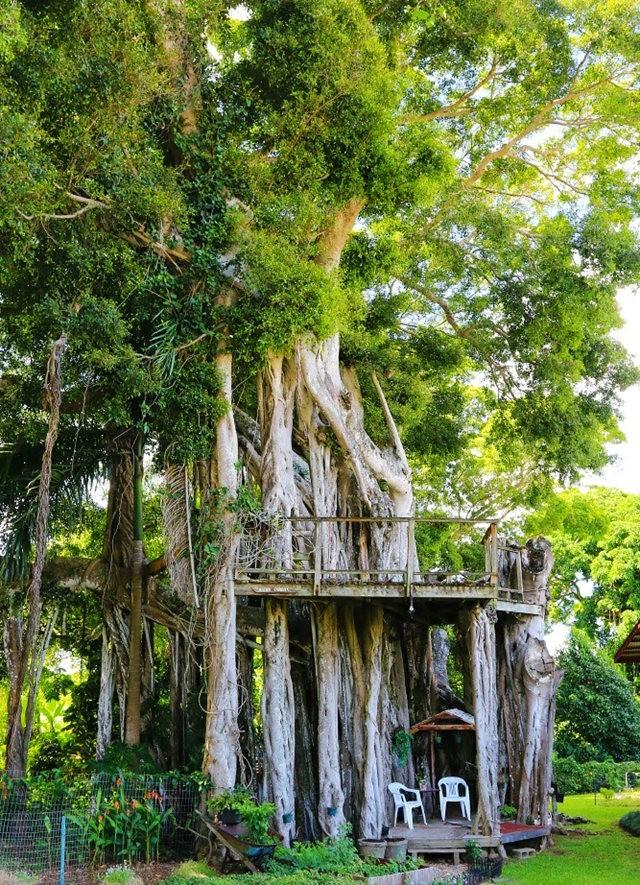 在夏威夷大岛度假_图1-22