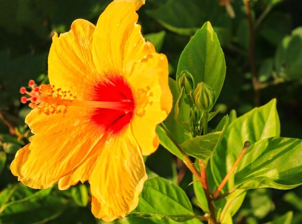 在夏威夷大岛度假---2_图1-5