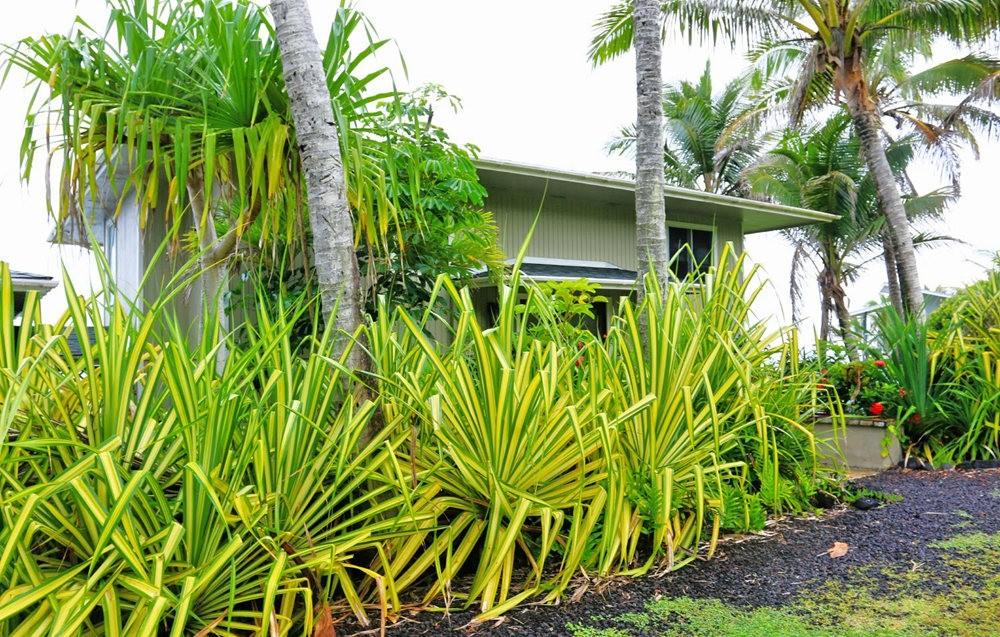 在夏威夷大岛度假---2_图1-7