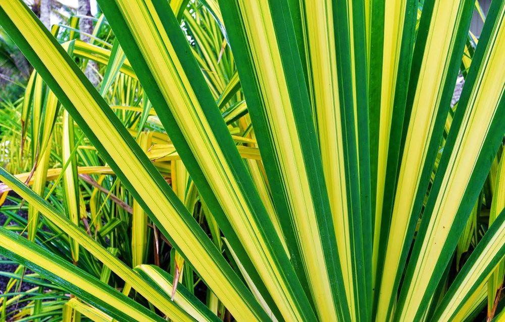 在夏威夷大岛度假---2_图1-8