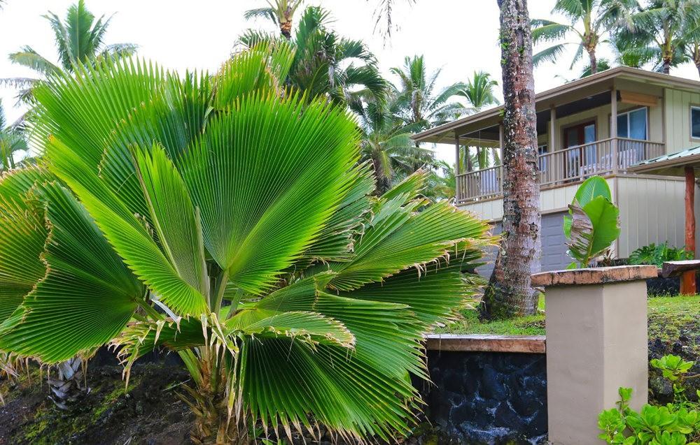 在夏威夷大岛度假---2_图1-9