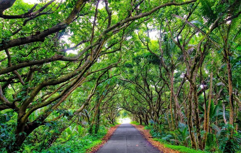 在夏威夷大岛度假---2_图1-12