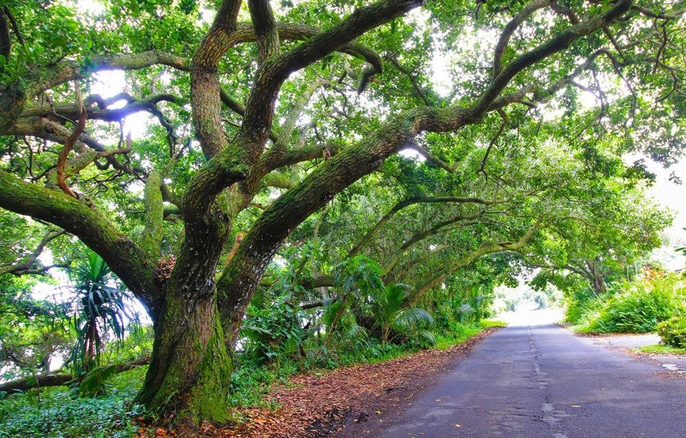 在夏威夷大岛度假---2_图1-14