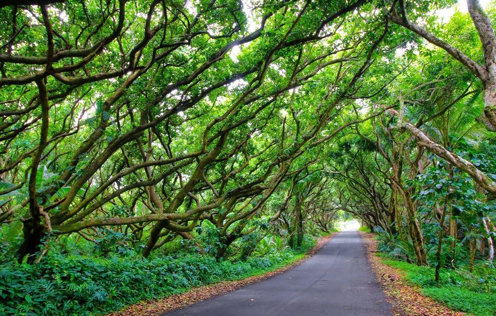 在夏威夷大岛度假---2_图1-15