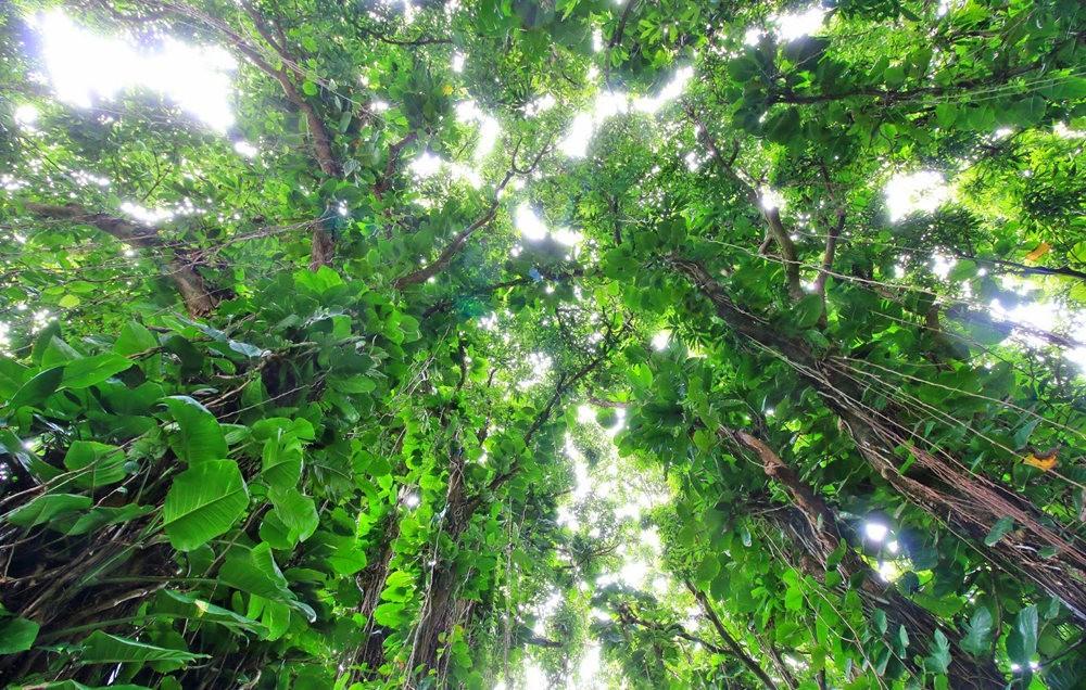 在夏威夷大岛度假---2_图1-16