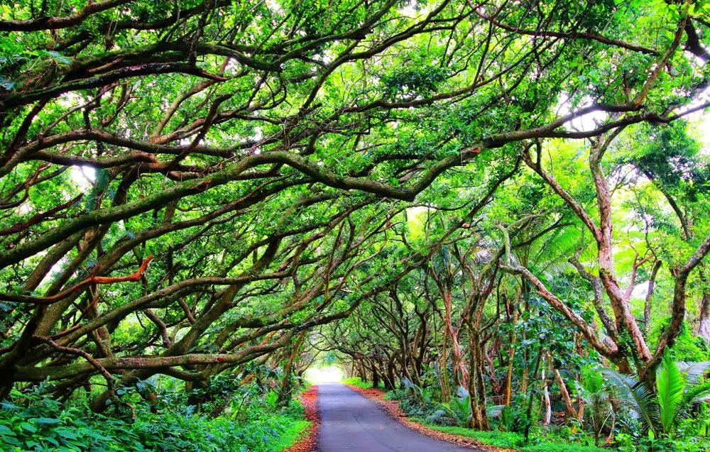 在夏威夷大岛度假---2_图1-18