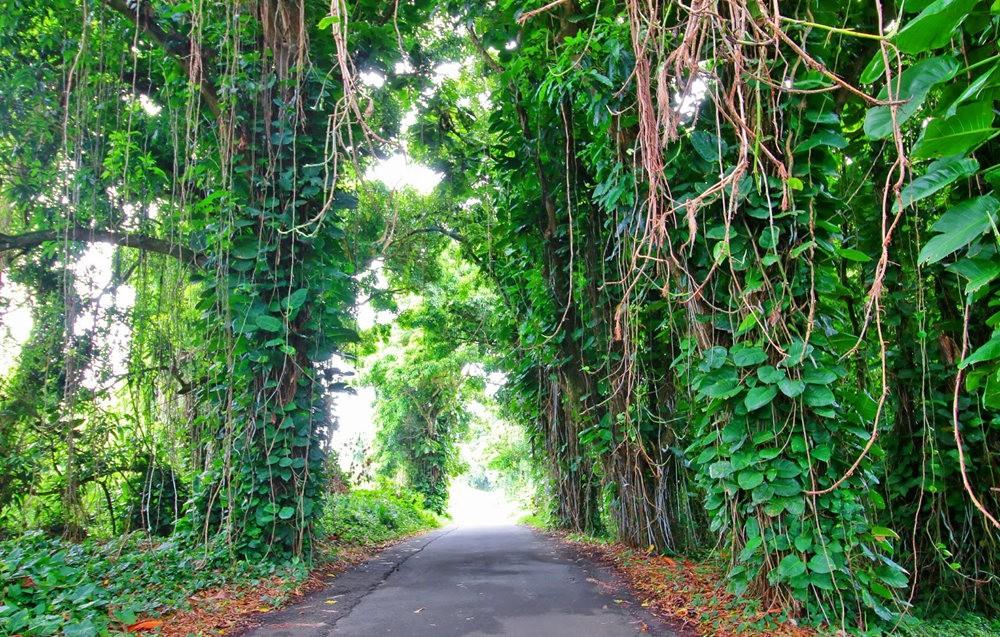 在夏威夷大岛度假---2_图1-19