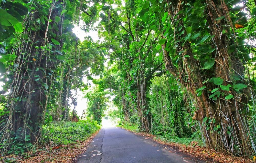 在夏威夷大岛度假---2_图1-20