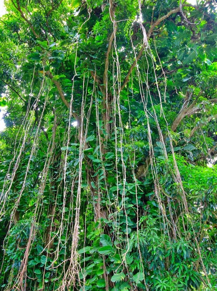在夏威夷大岛度假---2_图1-21