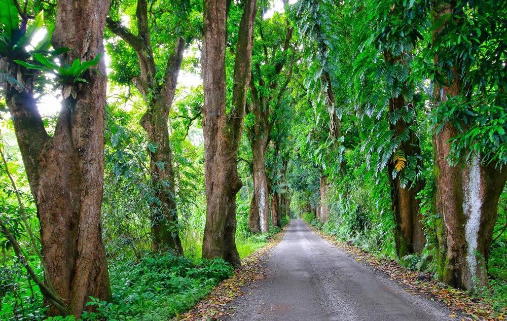 在夏威夷大岛度假---2_图1-23