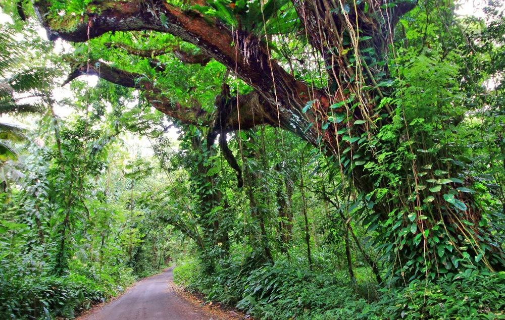 在夏威夷大岛度假---2_图1-24