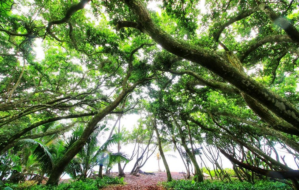 在夏威夷大岛度假---2_图1-26