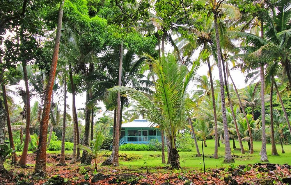 在夏威夷大岛度假---2_图1-29