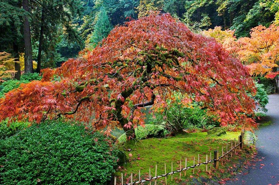 秋天的波特兰日本花园_图1-1