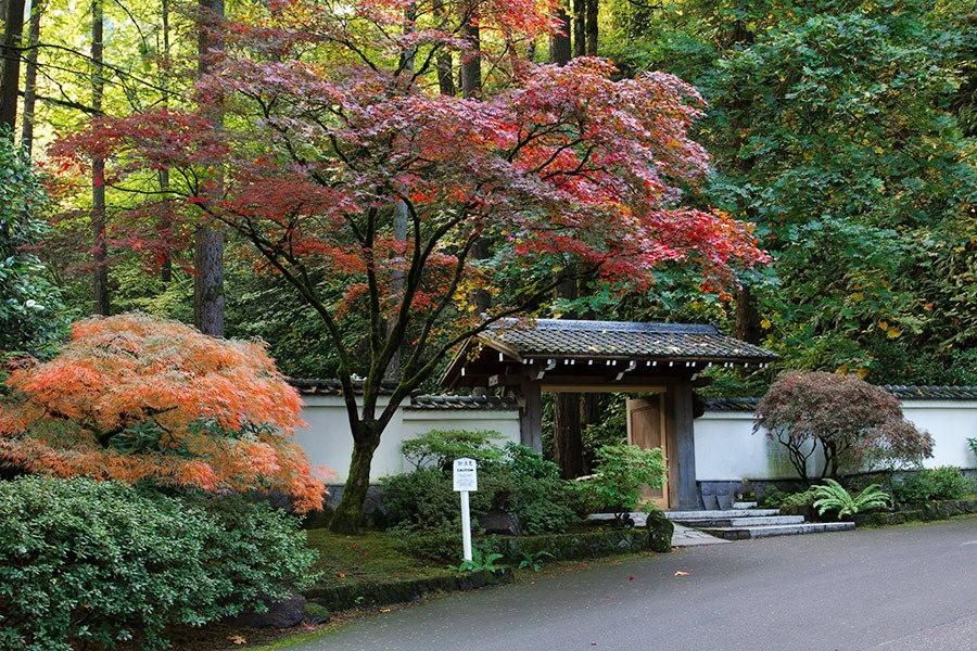 秋天的波特兰日本花园_图1-2