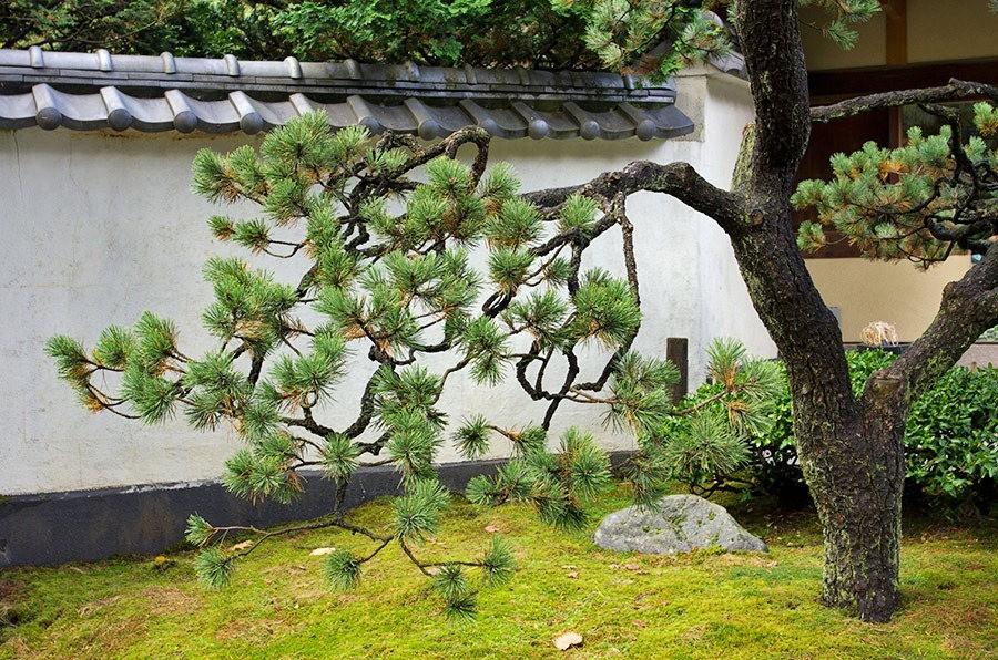 秋天的波特兰日本花园_图1-5