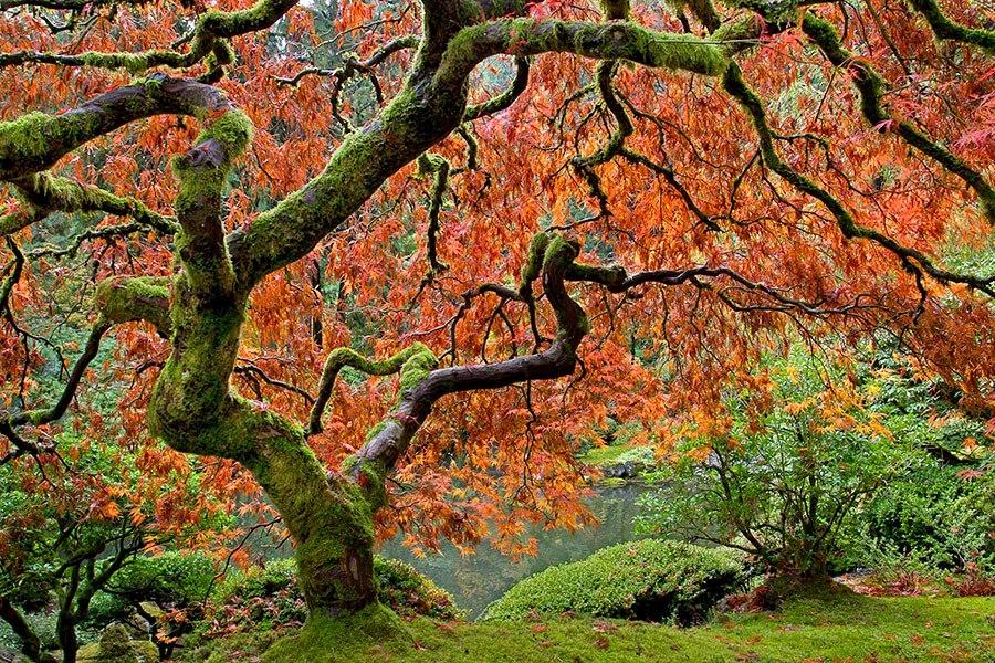 秋天的波特兰日本花园_图1-8