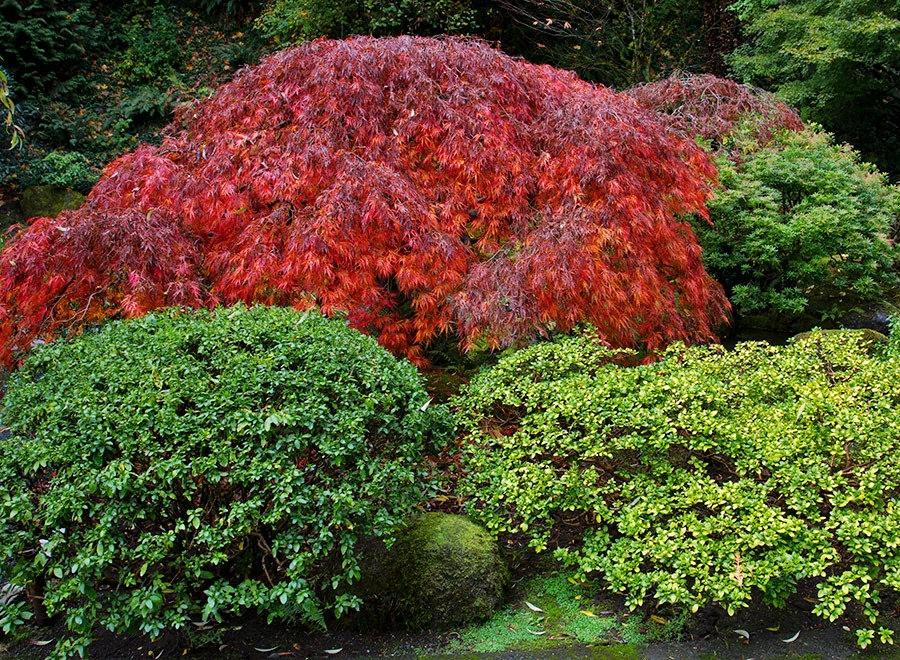 秋天的波特兰日本花园_图1-11
