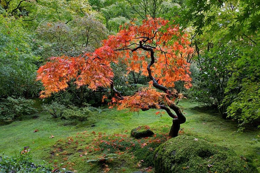 秋天的波特兰日本花园_图1-16