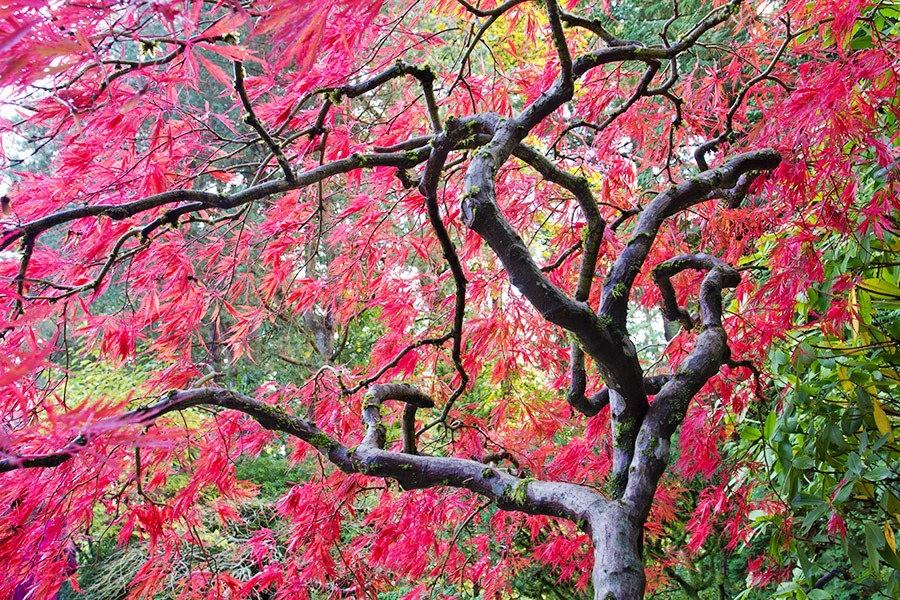 秋天的波特兰日本花园_图1-27