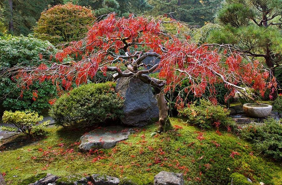 秋天的波特兰日本花园_图1-28