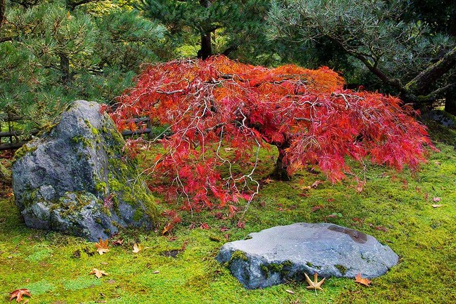 秋天的波特兰日本花园_图1-29