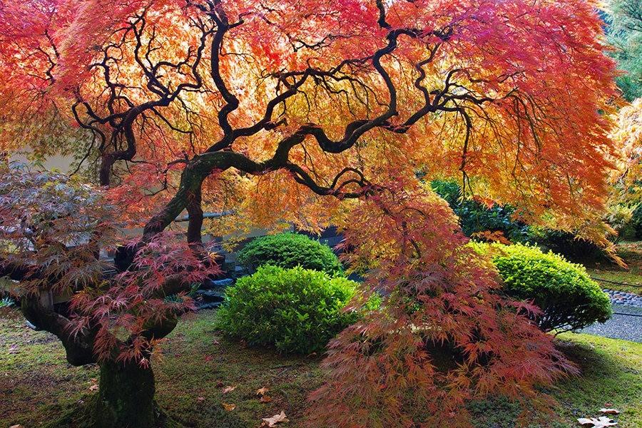 秋天的波特兰日本花园_图1-33